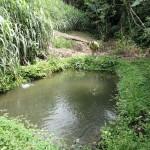 Estanque para la cría de peces con muchas hierbas y pastos alrededor que impiden el acceso.