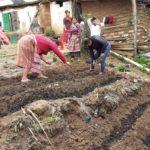 Implementacion de huerto familiar con plantas nativas
