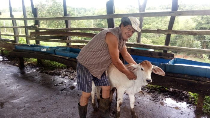 CORRAL HECHO POR DON MARCOS CAMPOS PARA ORDEÑO DE SUS ANIMALES, COMUNIDAD RIO MAGDALENA